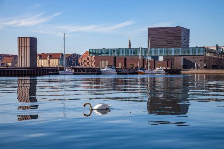 COPENHAGEN, DENMARK - MAY 6, 2018: swan swimming in calm water near moored boats and modern buildings in copenhagen, denmark