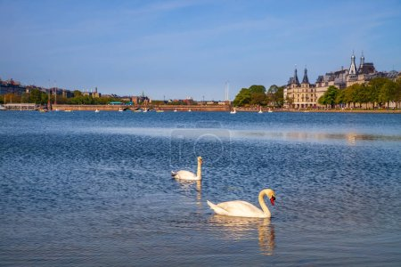 two swans on river with cityscape behind in Copenhagen, Denmark