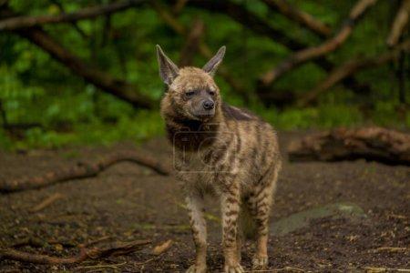 15.05.2019. Berlin, Germany. Zoo Tiagarden. The Ar...