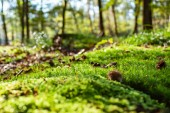 details of a mysterious mossy forest soil