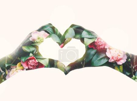 Photo pour Double effets d'une exposition sur une silhouette de deux mains en forme de coeur avec fond de fleurs de jardin. Image conceptuelle comme Sabine symbole de l'amour pour la nature et au printemps. Fête de la Saint-Valentin. Isolé - image libre de droit