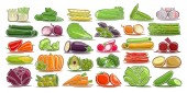 Vector set of fresh Vegetables 30 isolated design symbols of vegetarian vegetable meal group of colorful agriculture signs on white background illustrations of simple farm elements for packaging