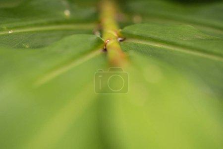 Closeup green leaf on a plant
