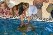 Children caressing breed fish on Project Tamar tank at Praia do
