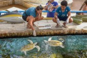 Woman who feeds the turtles on Project Tamar tank at Praia do Fo