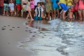 People observing baby turtles on Tamar project at Praia do Forte