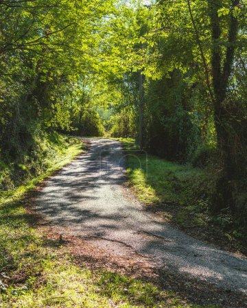 Photo pour Large vue de la route de montagne à travers la forêt près du parc national italien des Abruzzes, du Latium et de Molise - image libre de droit