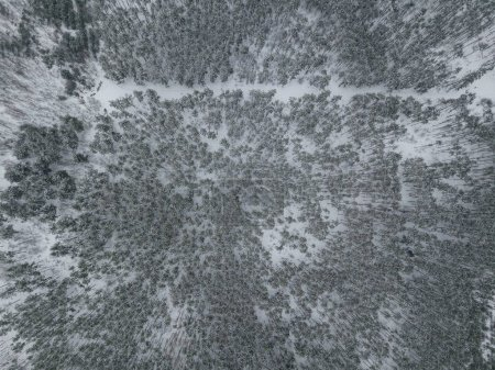 aerial view of winter forest covered with snow, Kyiv, Ukraine