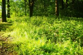 bright sunlight in the spring forest, Moscow