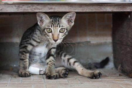 Photo pour Un chat errant a été mordu par un chien. Assis dans le désespoir . - image libre de droit