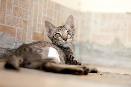 Photo pour Un chat errant a été mordu par un chien. En me retournant et en regardant la caméra, je l'ai regardée secrètement. Cette image a de l'espace pour mettre la description . - image libre de droit