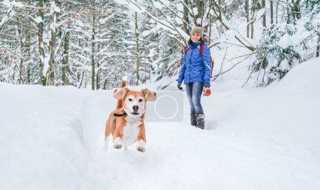 Photo pour Chien aigle actif courant dans la neige profonde. Son propriétaire féminin regardant et souriant. Promenades hivernales avec animaux concept image. - image libre de droit