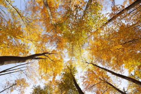 Top view of sunny colorful autumn seasonal forest trees