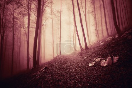 Scary red colored foggy light in mystic forest landscape