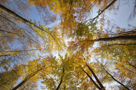Photo for Top view of sunny colorful autumn seasonal forest trees - Royalty Free Image