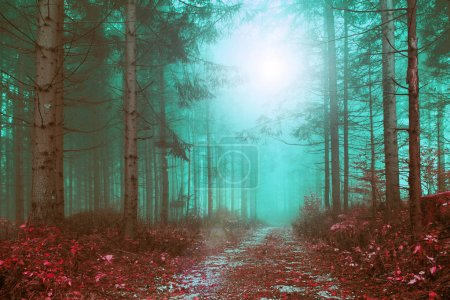 Fantasy colored foggy forest path with mystic foggy light