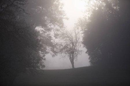 Photo pour Paysage brumeux du matin avec silhouette d'arbre dans un brouillard épais . - image libre de droit
