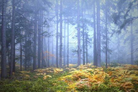 Photo pour Magique brouillard automne saison paysage forestier avec des plantes de fougère dorée . - image libre de droit