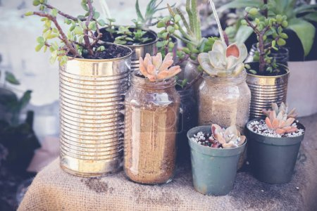 Photo for Succulents in rustic tins, Eco and reuse concept - Royalty Free Image