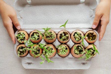 Foto de Manos sosteniendo las plantas de semillero en cáscaras de huevo, eco jardinería - Imagen libre de derechos