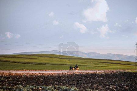 Photo pour Homme chevauchant des ânes avec la récolte dans des paniers sur la route parmi les collines verdoyantes sans fin au jour ensoleillé, Maroc - image libre de droit