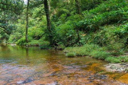 Foto de Hermoso paisaje natural del río en el bosque - Imagen libre de derechos