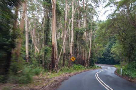 Photo for Winding road in the forest, motion blur, high speed motion effect - Royalty Free Image