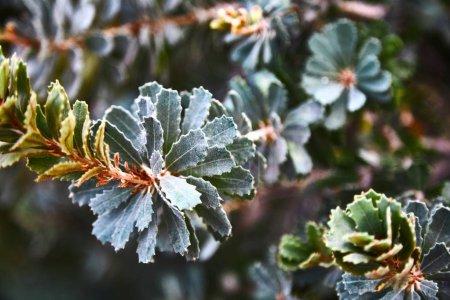 Plants. bushes. Close-up. Background. Tropical plant