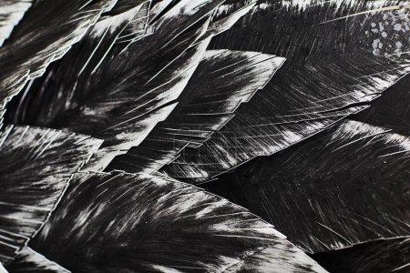 Close up. Decorative black bird