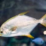 Reef tank, marine aquarium. Blue aquarium full of ...