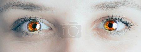Photo pour Gros plan des yeux de Karego d'une belle jeune femme. yeux bruns très proches. Œil humain, macro photographie - image libre de droit