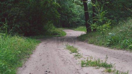 Photo pour Voie étroite serpentant à travers buissons verts et arbres, nuageux - image libre de droit