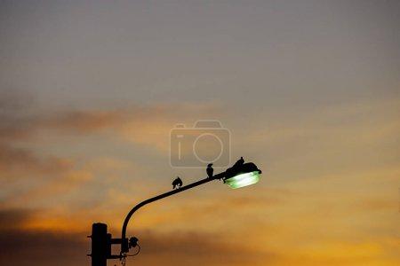 Photo pour Silhouettes noires d'oiseaux sur l'éclairage public et la lumière du coucher du soleil reflétée avec le nuage . - image libre de droit