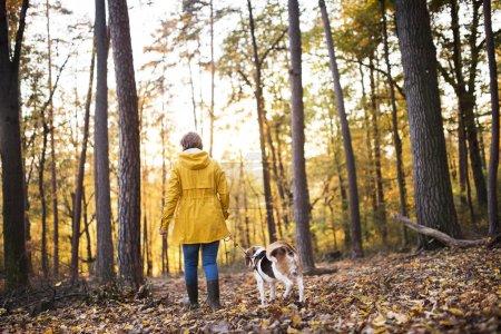 Photo pour Femme âgée active avec chien lors d'une promenade dans une belle forêt d'automne. Vue arrière . - image libre de droit