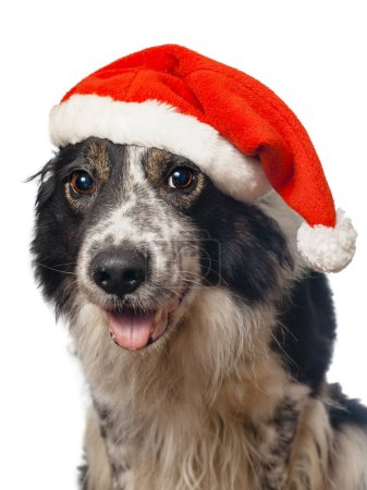 cute dog in Santa's hat