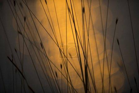 Foto de Brillo fondo bokeh agua - Imagen libre de derechos
