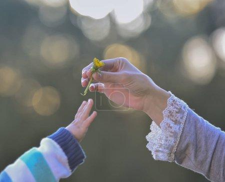 Photo pour Main donnant une fleur, mère et fils - image libre de droit