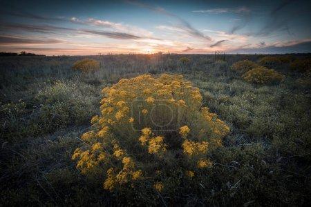 Photo pour Vue panoramique sur la nature au coucher du soleil - image libre de droit