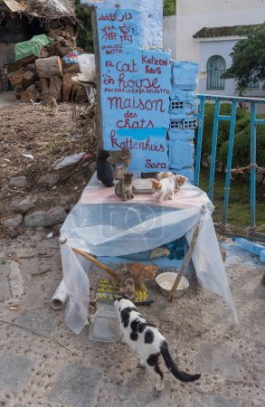Photo for Chefchaouen, Morocco - August 26, 2019 :  Little cats playing front of cats home  front of blue-washed house in the alleyways of the medina old town. - Royalty Free Image