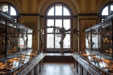 Photo for Vienna, Austria - 29.01.2020: The Museum of Natural History (Naturhistorisches Museum) inside interior. The largest and old museum displaying many specimens, dinosaur and mammoth bones - Royalty Free Image