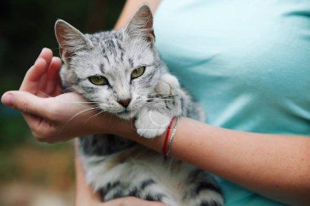 Cute grey tabby cat in female hands...