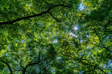 Photo for Beautiful tropical green tree and leaf in the forest with sun light - Royalty Free Image
