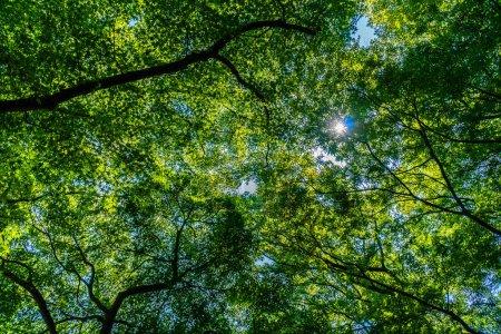 Photo pour Bel arbre vert tropical et la feuille dans la forêt avec la lumière du soleil - image libre de droit