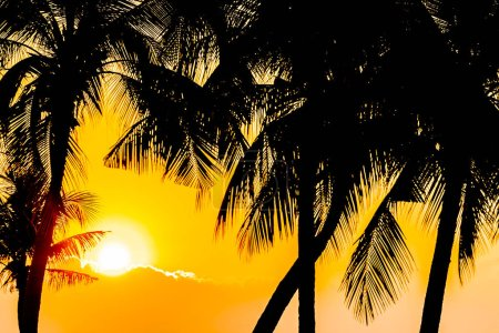 Photo for Beautiful Silhouette coconut palm tree on sky neary sea ocean beach at sunset or sunrise time for leisure travel and vacation concept - Royalty Free Image