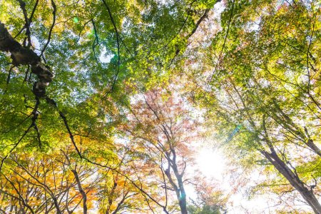 Photo for Beautiful red and green maple leaf tree in autumn season - Royalty Free Image