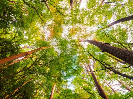 Photo pour Magnifique paysage du grand arbre dans la forêt avec vue ange bas point - image libre de droit