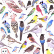 Birds of America- pets and wild birds seamless bac...