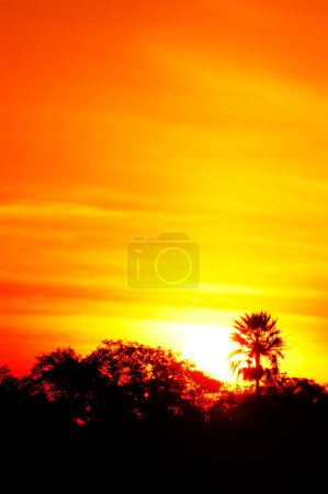 Photo for Sunset with palm tree - Royalty Free Image