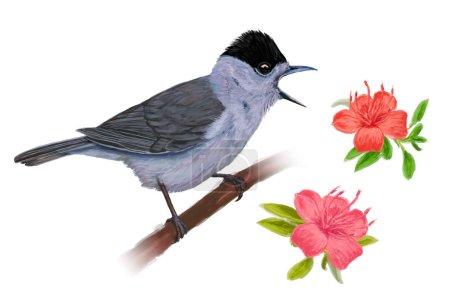 Photo pour Bonnet noir avec des fleurs isolées sur fond blanc . - image libre de droit