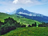 "Постер, картина, фотообои ""Альпийские пастбища и луга на склонах Альп Аппенцелль горный хребет - кантон Санкт-Галлен, Швейцария"""